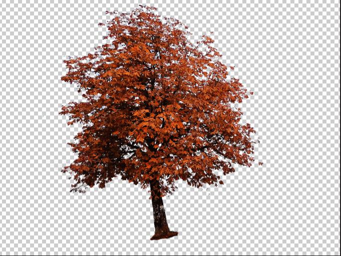 Ein freigestellter Baum in einer Photoshopdatei